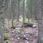 ca 90cm hoher Drop im Wald