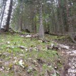 Kurvenreiche Passage im steilen, schwierigen Gelände