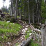 Kniffelige und steile Wurzelpassage