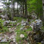 Steiniges Gelände im Wald