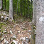 Flaches Waldstück