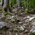 Suchbild: Wo ist der Trail