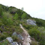 Trail im Latschenfeld