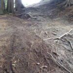 Wurzeln auf dem Downhill Bikepark Serfaus Fiss Ladis