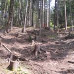 gefällte Bäume im Bikepark Wurbauerkogel