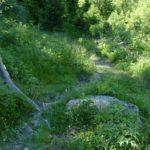 im Gras versteckte Wurzeln