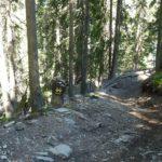 X-Line im Wald