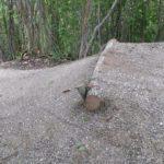 Kleiner Sprung vorm Wallride am Wurbauerkogel