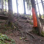 im Wald im Bikepark Wurbauerkogel