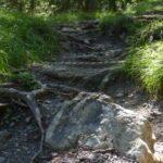 Wurzeln, Steine und Stufen: Typisch für Forrest One