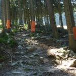 Viele Steine und Wurzeln am Downhill