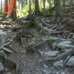 technische Stelle mit Wurzeln und Steinen am Downhill Bikepark Semmering