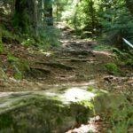 Naturbelassener Waldboden am Downhill Todtnau