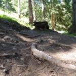 Drop am Beginn des Trails Forrest One