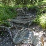 Wurzelstelle am Trail Forrest One