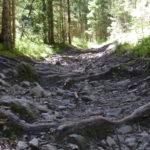 Von Wurzeln durchzogener steiniger Untergrund im Bikepark Lermoos