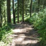 steilste Stelle des Trails Forrest One