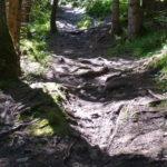 wurzeliger Waldboden