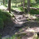 schmaler von Wurzeln durchzogener Trail Forrest One
