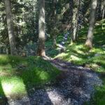 Trailabschnitt im Wald