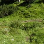 Grubigalm Trail zwischen Latschenfeldern