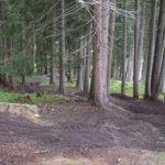 Downhill Strecke durch den Wald