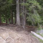 Einfahrt in den Wald über einen Wurzelteppich