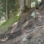 steile Stelle am EinsEinser Trail