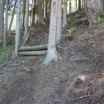 EinsEinser Trail durch Wald