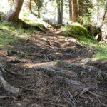 loser Waldboden mit Wurzeln am EinsEinser Trail