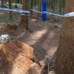 Auch hier finden sich wieder einige Baumstümpfe die als Stufen genutzt werden können