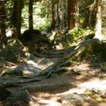 Steine, auch im Wald