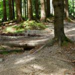 Unterer Trailabschnitt im Wald