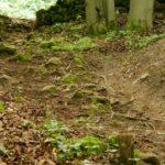 kleinere Wurzeln auf Freeride Osternohe