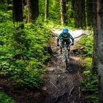 Wurzeln am Alpen Ride