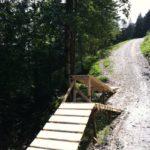 Obstacles mit Chickenway im Bikepark Hindelang