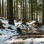 Roter Trail Bikepark Lipno