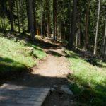 Erste Meter des Trails