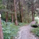 Gap am Singletrail Muttersberg Bludenz
