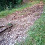 Wurzeln am Singletrail Muttersberg Bludenz