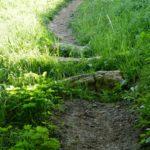 Die ersten Steine am Downhill Trail