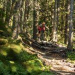 Wurzeln im Wald in Kirchberg