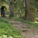 Biker auf Hardrock Trail im Bikepark Wagrain