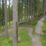 Strecke Nail Games im Bikepark Wagrain